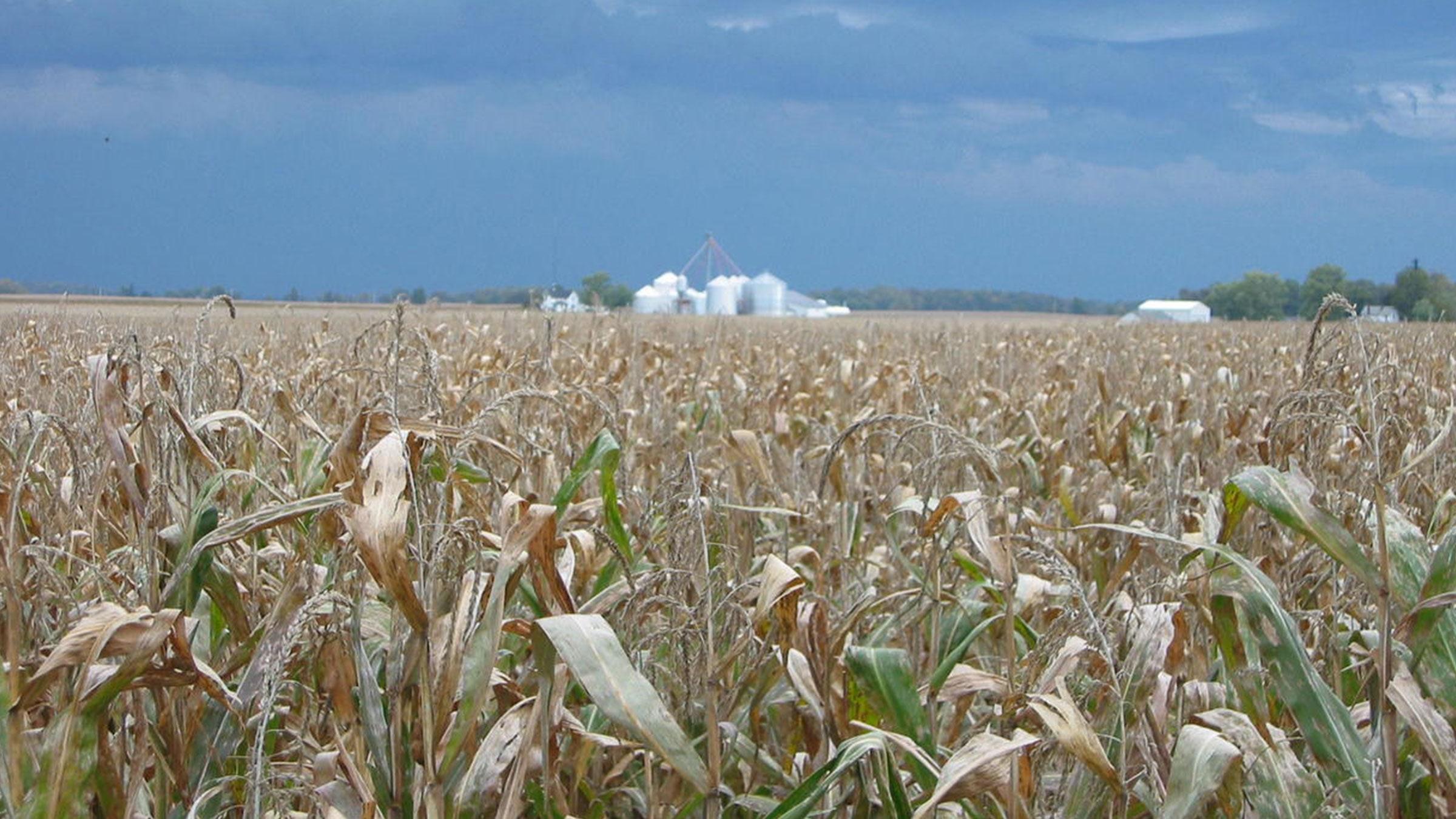 Food and Life: The World According to Monsanto